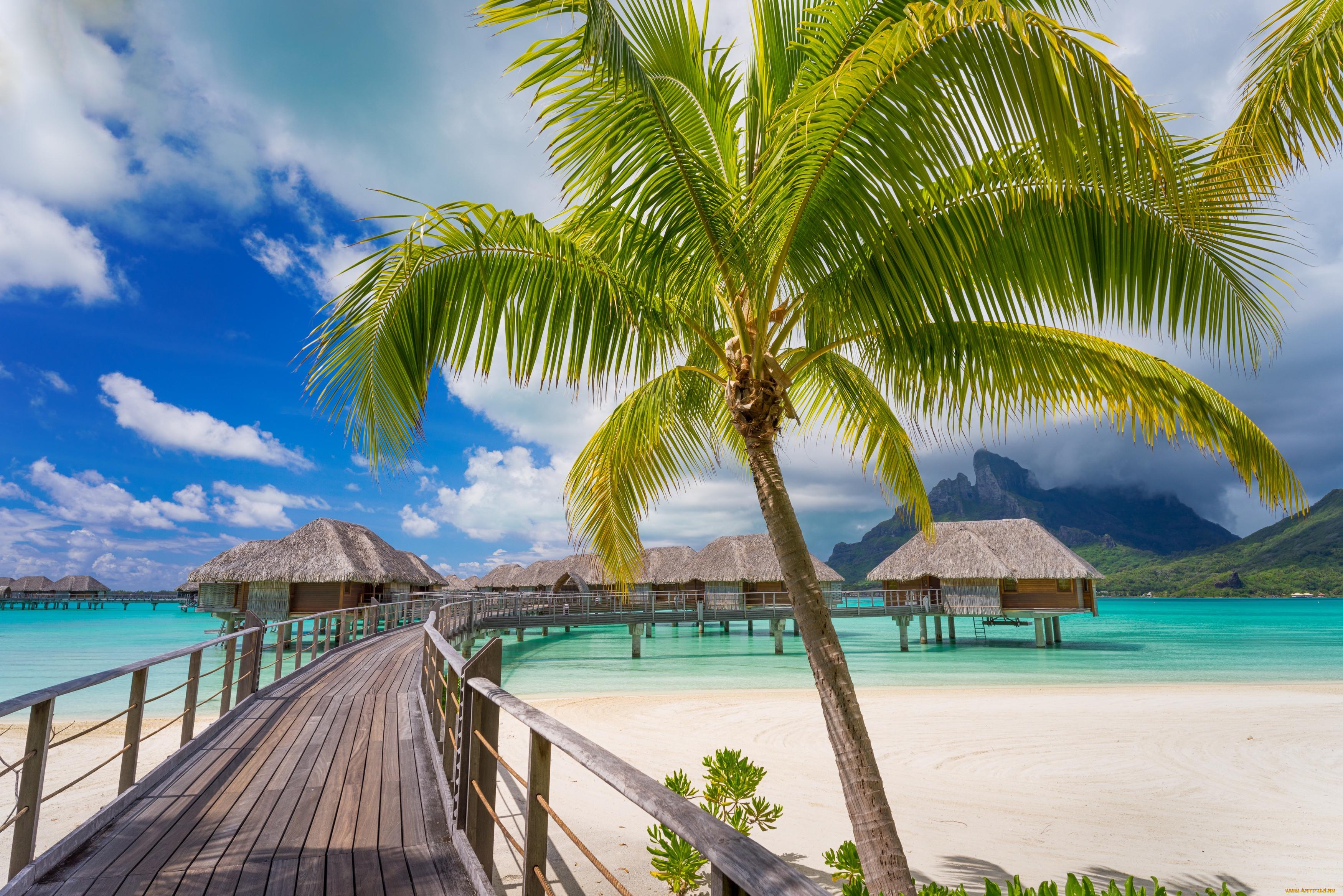 Море пальмы пляж картинка
